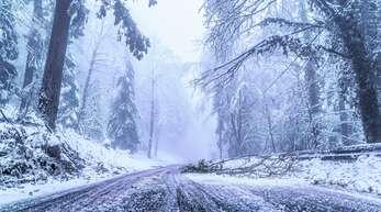 Auch am Donnerstag war den vierten Tag in Folge manche Straße im Höhengebiet gesperrt. Jeden Moment können Äste oder ganze Bäume brechen und auf die Straße fallen. Unter dem Schnee liegt nach heftigem Eisregen ein Eispanzer auf den Bäumen.