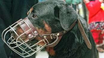 Die beiden Rottweiler des beschuldigten Hundehalters müssen unter anderem Maulkörbe tragen, wenn sie ausgeführt werden. Auch gegen diese Auflage soll er verstoßen haben.