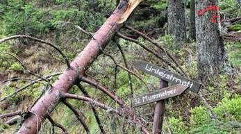 Schnee und Eis haben enorme Schäden wie hier im Hornisgrindebereich verursacht. Die Sasbacher Gemeinderäte wollen nun ein Teil des Holzes als Totholz liegen lassen und damit zum Schutz der Natur beitragen.