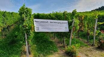 Die Weinbruderschaft Ortenau kritisiert das Volksbegehren Artenschutz. In den Reben bei Ortenberg weisen Winzer indes auf mögliche Folgen des Volksbegehrens hin.