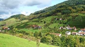 Die Landschaft in Furschenbach, an der Grenze zu Kappelrodeck mit den letzten Reben im Achertal und vielen Streuobstbäumen. Der Gemeinderat Ottenhöfen macht sich Sorgen, dass vieles davon verschwinden könnte, wenn der Gesetzentwurf als Gesetz beschlossen. Deshalb hat das Gremium eine Resolution gegen das Volksbegehren verfasst.