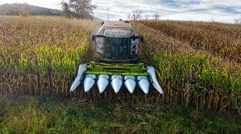 Für die kleinteiligen Maisfelder bei Ebersweier verwendet Egon Busam einen sechsreihigen Maispflückvorsatz an seinem Mähdrescher.