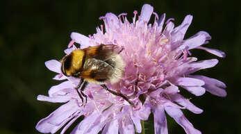 """Unter dem Motto """"Rettet die Bienen"""" steht das Volksbegehren zum Artenschutz in Baden-Württemberg."""