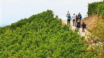 """Am Sonntag, 4. Oktober, können Teilnehmer beim Aktionstag """"Offenburger Weinspaziergänge"""" die herrliche Landschaft und den Wein genießen."""