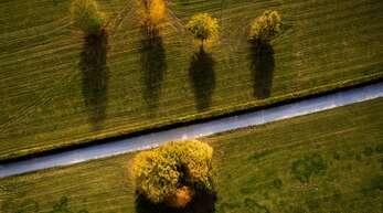 Das Sterben der Wälder in Baden-Württemberg nimmt zu.