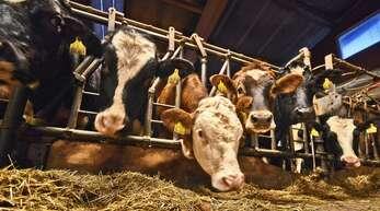Die Haltung von Milchkühen wird für Landwirte im Ortenaukreis zunehmend unwirtschaftlicher. Der Milchpreis liegt derzeit bei unter 30 Cent.