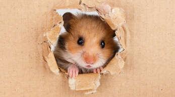 Was haben Hamster mit TikTok zu tun?