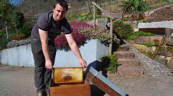 Michael Roth aus Ramsbach weiß um die gute Bestäubungsleistung der Bienen. Stehen deren Kästen erst einmal in Folientunnels oder Gewächshäusern, können sie dort die Ernte und die Qualität der Produkte verbessern, ist der Imker überzeugt.