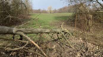 39 Hektar Natur am Stadtrand von Achern bietet der ehemalige Standortübungsplatz. Die Stadt selber hat dort nichts zu melden.