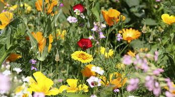 """Hausgärten und Balkone der Willstätter sollen sich auch heuer wieder in bunte Blütenmeere verwandeln – nicht nur ein """"Hingucker"""", sondern auch ökologisch wertvoll."""