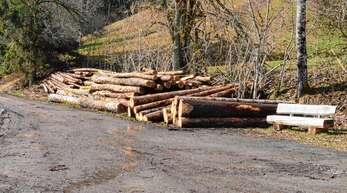 Da, wo derzeit noch Holz gelagert wird, parken hin und wieder Autofahrer, die zum Friedwald auf den Roßberg in Kaltbrunn zu Fuß gehen wollen. Künftig soll er als Wanderparkplatz für den neuen Roßbergsteig dienen.