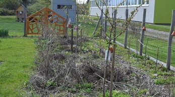 Aktuell sieht der Blühstreifen im Schulgarten der Moscherosch-Schule alles andere als einladend aus.