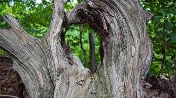 Ein ökologisch und wirtschaftlich wertvoller Kehler Stadtwald – das ist das Ziel des Forsteinrichtungswerks 2021 – 2030, das der Gemeinderat jetzt verabschiedet hat.