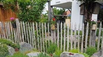 Dosen-Geranien im Garten.