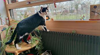 Die Schloßgartenschule in Großweier hatte vor ihrem Schulkater keine Katze. Nach Niki wird man schauen, ob sich wieder ein Vierbeiner die Schule als zweites Zuhause aussuchen wird.
