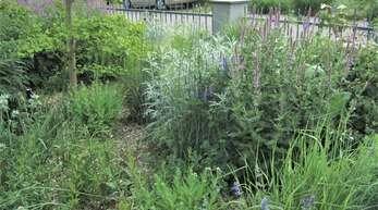 Im Präriegarten verschwindet die Kiesmulchung im Sommer optisch unter hohen Gräsern und Stauden wie Salbei und Silbrigem Beifuß (Artemisia).