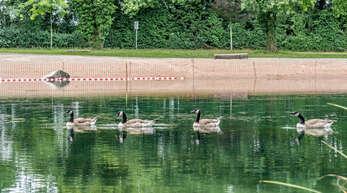 Die Verunreinigungen durch Wasservögel haben abgenommen, die Wasserqualität an der Badestelle Goldscheuer hat sich verbessert.