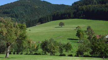 Wälder und Wiesen sind typisch für den Schwarzwald. Die Landschaft offenzuhalten ist daher eine wichtige Aufgabe.