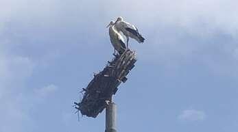 Das alte Nest bei der Hanauerlandhalle wurde von einem Sturm destabilisiert. Ein neues Nest dort zu installieren, war eine größere Aktion.