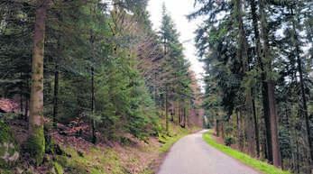 Die Forstbetriebsgemeinschaft kümmert sich um die Unterhaltung von Waldwegen.