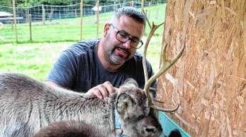 Rudolf und Blitz heißen die jungen Rentiere, die seit Kurzem auf dem Basgardehof in Ottenhöfen leben. Hofherr Michael Thoma will Winterwanderungen mit ihnen anbieten.