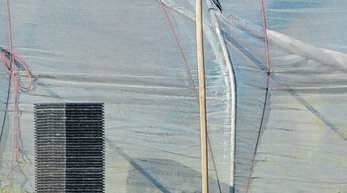 Krähenkadaver wie dieser hängen derzeit auf Feldern bei Zusenhoen.