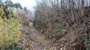 Der Hohlweg an der nordöstlichen Grenze des Baugebiets »Hilsen II« ist als Biotop zu pflegen.