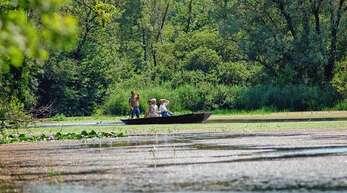 Der Taubergießen – ein grünes Idyll, das von Besuchern gerne per Boot erkundet wird.