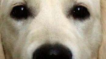 Hundehasser legt in Rastatt präparierte Köder aus