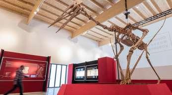 Der Flugsaurier hat zwölf Meter Spannweite.