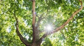 Es bleibt heiß in Deutschland - und in immer mehr Städten retten Feuerwehren die Bäume vor dem Vertrocknen.