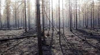 Ein ausgebrannter Wald im Bezirk Ljusdal. Über Schwedens Wäldern liegt weiter dichter Qualm.