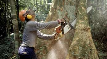 Holzfäller im brasilianischen Regenwald.