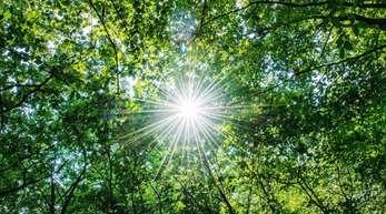 Die Sonne scheint in einem Wald. Bäume verlieren bei großer Hitze häufig plötzlich Äste.