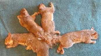 Die fünf Eichhörnchen vor dem Eingriff.