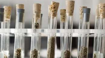 «Die Substanzen wirken oft sehr viel stärker als etwa Cannabis oder andere herkömmliche Drogen und werden oft überdosiert«, erläutert Toxikologin Nadine Schäfer vom Institut für Rechtsmedizin der Universität des Saarlandes in Homburg.