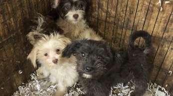 Einige der Hunde, die aus einem Heim in Burlington County gerettet wurden.