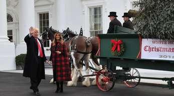 Donald und Melania Trump freuen sich über ihren Weihnachtsbaum.