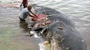 Fischer stehen auf der Insel Sulawesi in Indonesien an einem toten Wal.