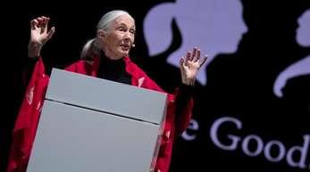 Die britische Verhaltensforscherin Jane Goodall hält in München ihren Vortrag «Reasons for Hope».