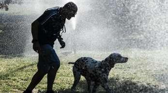 Abkühlung: Ein Mann und ein Hund laufen im Tiergarten unter der Wasserfontäne eines Rasensprengers hindurch.