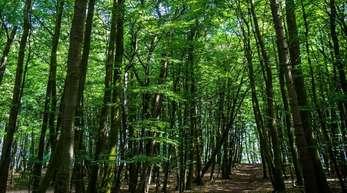 Der Wald eignet sich nur bedingt als Geldanlage, aber andere nachhaltige Investitionen haben deutlich an Bedeutung gewonnen.