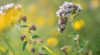 Mehr Insekten auf Äckern und Weiden ist das Ziel eines EU-Projektes.
