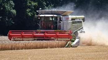 Im Vergleich zur «Missernte» im vergangenen Jahr könnte das Ertragsniveau der Bauern wieder leicht steigen.