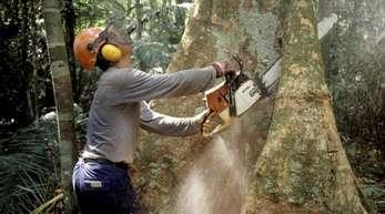 Die «grüne Lunge» ist bedroht: Abholzung bei Manaus im brasilianischen Regenwald.