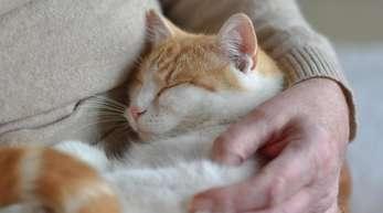 Ein Test zeigt, dass sich Katzen in neuen Situationen ihren Besitzern gegenüber ähnlich verhalten wie Kleinkinder gegenüber ihren Eltern.