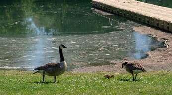 Das Baden am Goldscheurer See wurde verboten.