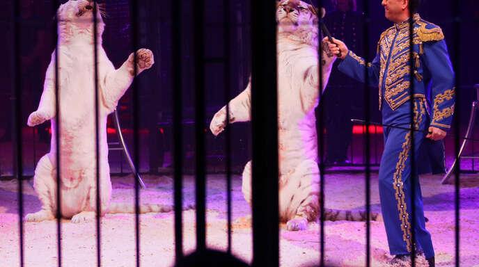 Der moderne Zirkus behandelt seine Tiere gut – auch Raubkatzen wie den Tiger. Das bekräftigen die Macher des Offenburger Weihnachtscircus'.