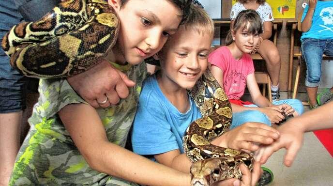 Pitu auf Besuch: Anja Glaser zeigt ihre sich durchs Leben schlängelnde Boa Constrictor gerne auch mal den Kleinen in Schulen und Kindergärten.