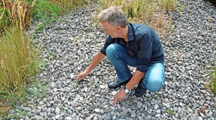 Kehl Umwelt Stadt Kehl Rät Von Steingärten Ab Nachrichten Der